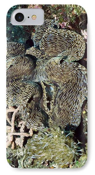 Fluted Giant Clam Phone Case by Georgette Douwma