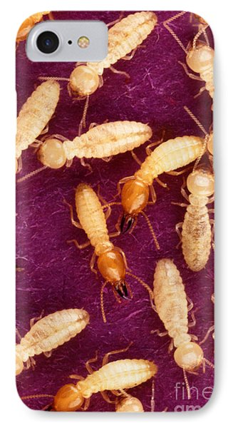 Formosan Termites Phone Case by Science Source