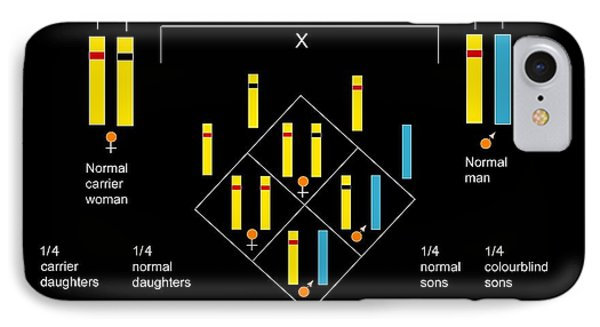 Genetics Of Colour Blindness, Diagram Phone Case by Francis Leroy, Biocosmos