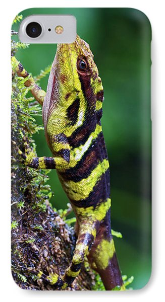 Giant Anole Dactyloa Microtus Male Phone Case by James Christensen