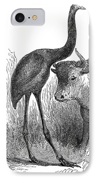 Giant Moa And Prehistoric Cow, Artwork Phone Case by