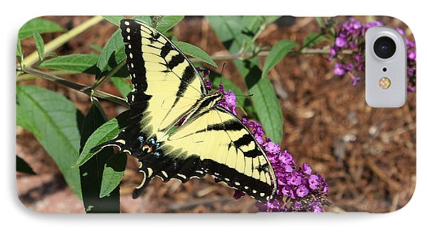 Giant Swallowtail Butterfly Phone Case by Theresa Willingham