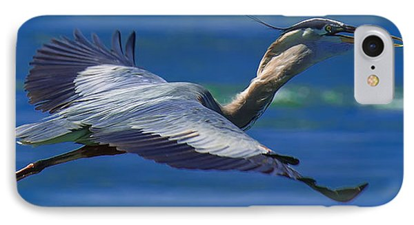 Gliding Great Blue Heron IPhone Case by Sebastian Musial