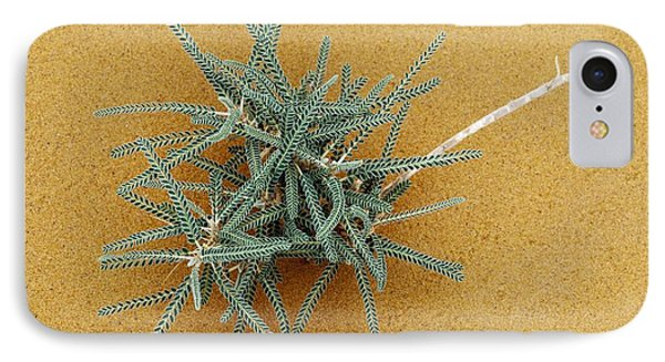 Goat's-thorn (astragalus Gombo) Phone Case by Dirk Wiersma