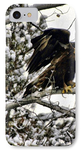 Golden Eagle Stretching Phone Case by Don Mann