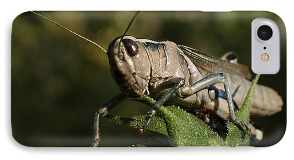 Grasshopper 2 Phone Case by Ernie Echols