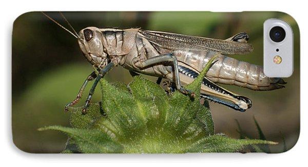 Grasshopper IPhone 7 Case by Ernie Echols