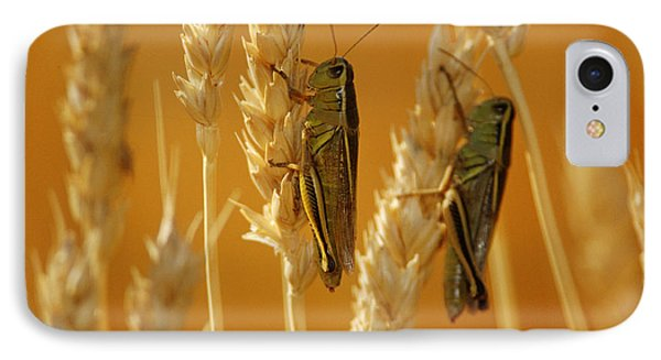 Grasshoppers On Wheat, Treherne Phone Case by Mike Grandmailson