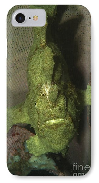 Green Frogfish In Sponge, North Phone Case by Mathieu Meur