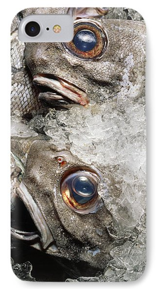 Grenadier Fish Packed In Ice After Being Caught IPhone Case by Sinclair Stammers