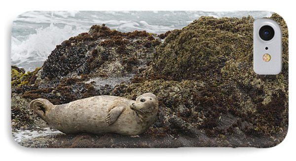 Harbor Seal  Point Lobos State Reserve IPhone Case by Sebastian Kennerknecht