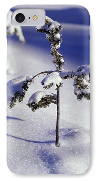 Heavy Snow On Young Pine Tree IPhone Case by Natural Selection Craig Tuttle