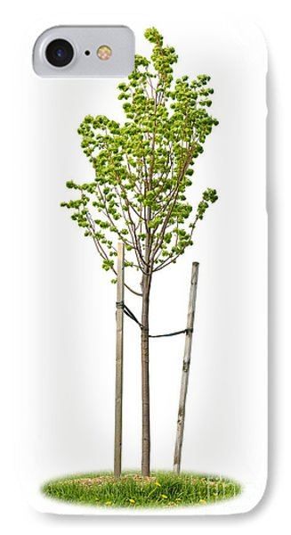 Isolated Young Linden Tree IPhone Case by Elena Elisseeva