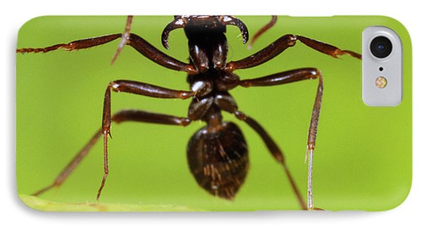 Japanese Slave-making Ant Polyergus IPhone Case by Satoshi Kuribayashi