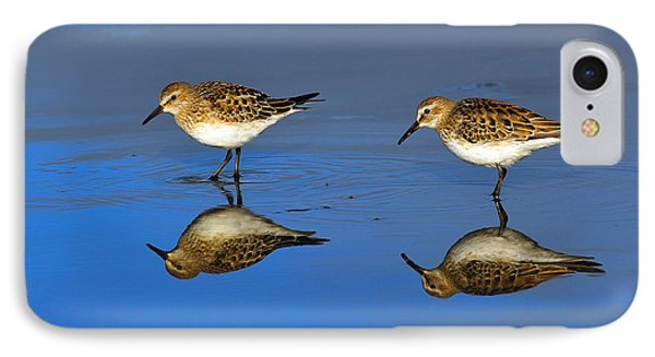Juvenile White-rumped Sandpipers Phone Case by Tony Beck