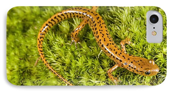 Longtail Salamander Eurycea Longicauda IPhone 7 Case by Jack Goldfarb