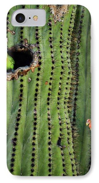 Lovebirds And The Saguaro  IPhone Case by Saija  Lehtonen