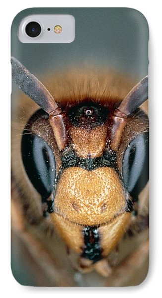 Macrophoto Of Head Of Hornet Vespa Crabro IPhone Case by Dr. Jeremy Burgess