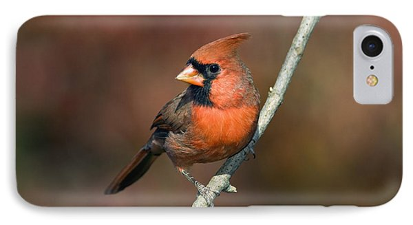 Male Northern Cardinal - D007813 IPhone Case by Daniel Dempster