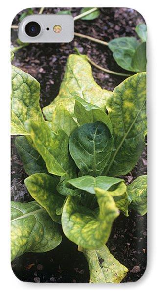 Mandrake (mandragora Officinarum) Phone Case by Adrian Thomas