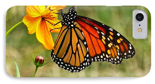 Monarch Butterfly And Yellow Cosmos Phone Case by Byron Varvarigos