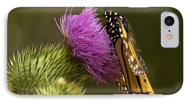 Monarch Thistle Munching Phone Case by Darleen Stry