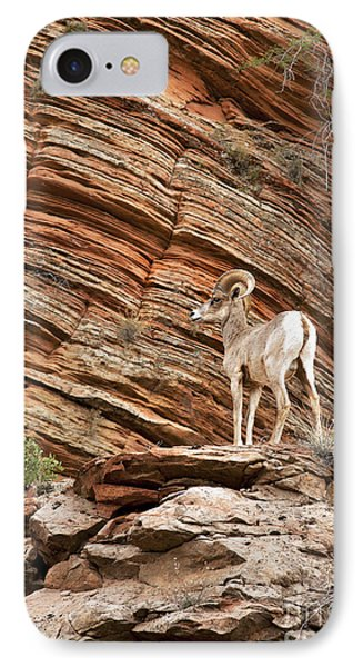 Mountain Goat IPhone Case by Jane Rix