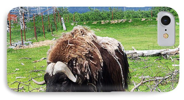 Musk Oxen Phone Case by Aimee L Maher Photography and Art Visit ALMGallerydotcom