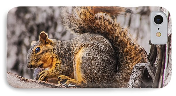 My Nut Phone Case by Robert Bales