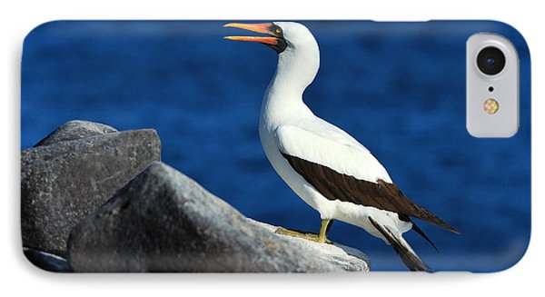 Nazca Booby IPhone Case by Tony Beck