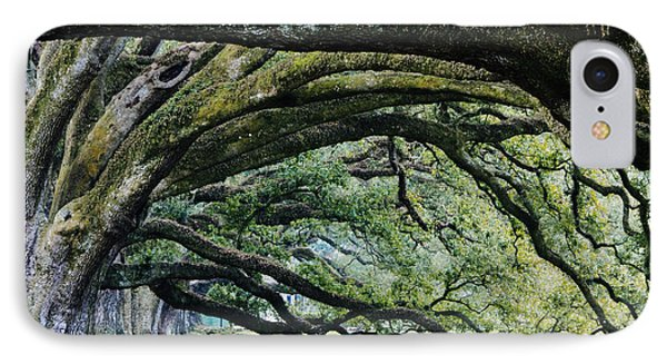 Old Growth Trees Phone Case by Jeremy Woodhouse