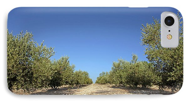 Olive Grove IPhone Case by Carlos Dominguez
