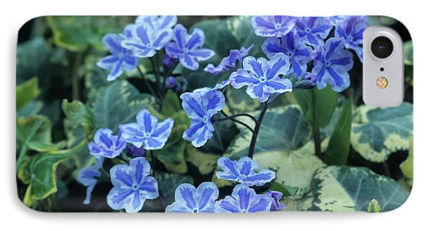 Omphalodes 'starry Eyes' Flowers Phone Case by Archie Young
