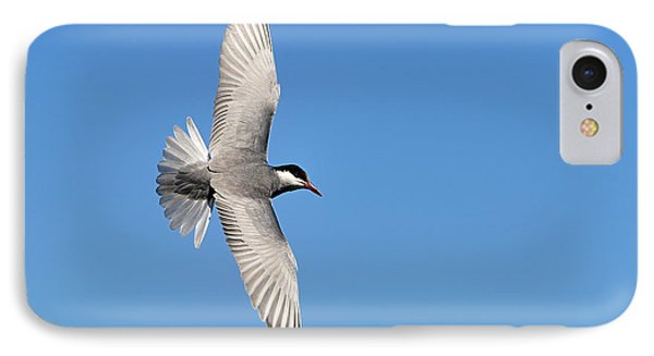 One Good Tern Deserves Another Phone Case by Tony Beck