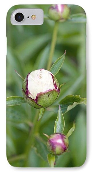 Paeonia Lactiflora 'shirley Temple' IPhone Case by Jon Stokes