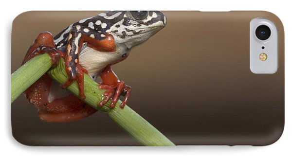 Painted Reed Frog Botswana Phone Case by Piotr Naskrecki