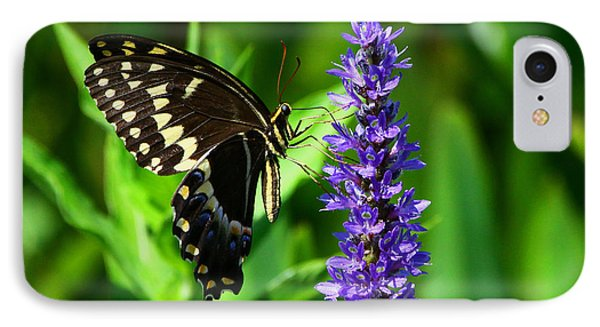 Palamedes Swallowtail Butterfly Phone Case by Barbara Bowen
