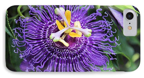 Passionflower Purple Phone Case by Rosalie Scanlon