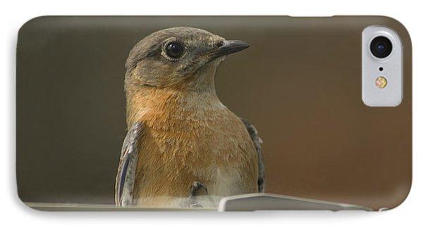 Peeping Bluebird Phone Case by Kathy Clark
