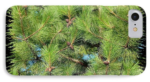 Pine Cones And Needles Phone Case by Will Borden