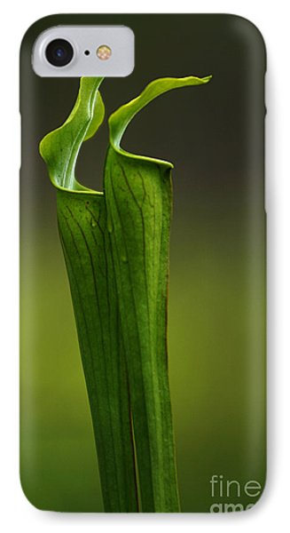 Pitcher Plants 2 Phone Case by Bob Christopher