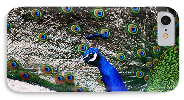 Proud Peacock IPhone Case by Sheryl Cox