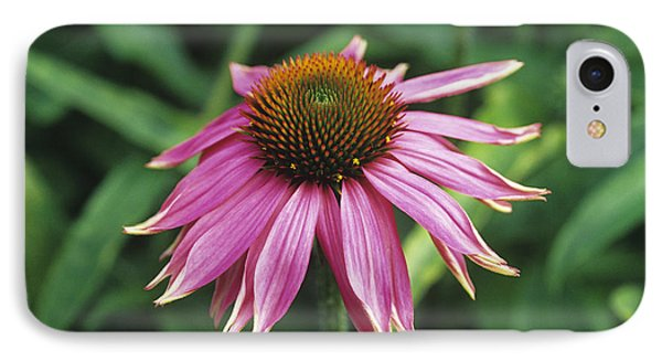 Purple Coneflower Phone Case by Duncan Smith