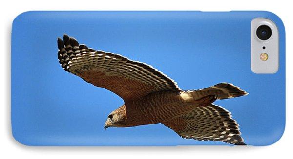 Red Shouldered Hawk In Flight IPhone 7 Case by Carol Groenen