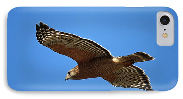 Red Shouldered Hawk In Flight IPhone Case by Carol Groenen