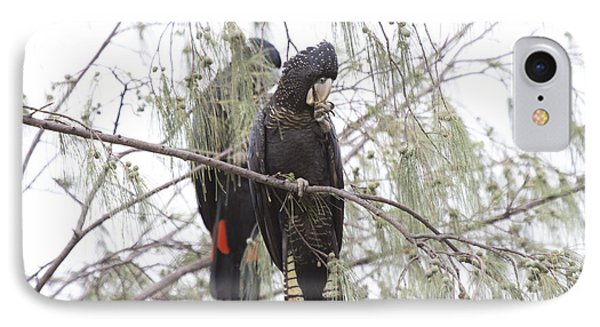 Red Tailed Black Cockatoos IPhone 7 Case by Douglas Barnard