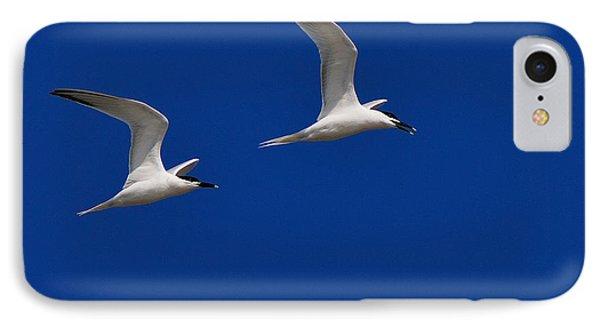 Sandwich Terns Phone Case by Tony Beck