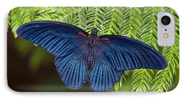 Scarlet Swallowtail Phone Case by Joann Vitali