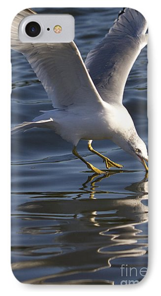 Seagull On Water IPhone Case by Dustin K Ryan