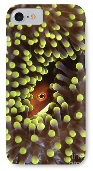 Skunk Clownfish Hiding In Anemone Phone Case by Beverly Factor